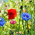 Cottage Garden by Sharon Lisa Clarke