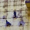 Couple Of Pigeons On A Wall by Ashish Agarwal