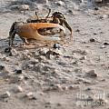 Crab by Luis Alvarenga