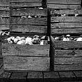 Crated Apples Waiting For The Cider Press by Randall Nyhof