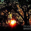 Creole Trail Sunset by Lizi Beard-Ward