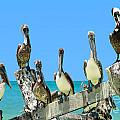 Crowd Of Brown Pelicans Perched On An Old Peer by Sylvie Bouchard