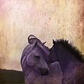 Cuddle Me by Angel  Tarantella