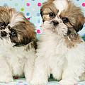 Curious Twins by Greg Cuddiford