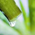 Cut Aloe Vera Leaf by Alex Hyde