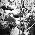 Cut Stone Blocks Backyard Snow Aberdeen South Dakota 1965 Black And White by David Lee Guss