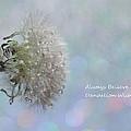Dandelion Wishes by Krissy Katsimbras