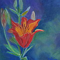 Day Lily by Calliope Thomas