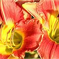 Daylily by Karen Beasley