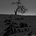 Death Of An Oak Tree by B Christopher