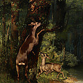 Deer In The Forest by Mountain Dreams