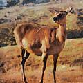 Deer On Mountain  by Pixel Chimp