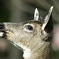 Deer Sunshine Profile by Ian Mcadie