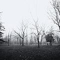 Desolate by Margie Hurwich