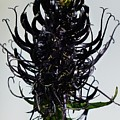 Devils Claw Flower by FL collection