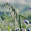 Dew Drops On Grass by Werner Lehmann