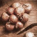 Digital Painting Of Brown Onions On Kitchen Table by Jorgo Photography - Wall Art Gallery