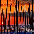 Digital Painting Of Looking Through Beach Umbrella Poles At Sunset by Ken Biggs