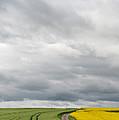 Dirt Road Passing Through Grain by Panoramic Images
