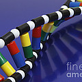 Dna Double Helix by GIPhotoStock