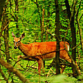 Doe On The Move by Crystal Heitzman Renskers