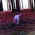 Dog by Karl Rose