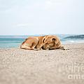 Dog Sleeping On Beach by Yew Kwang