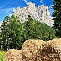 Dolomiti - Alpine Pasture by Antonio Scarpi