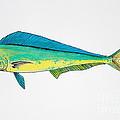 Dolphin Fish by Sean Hughes