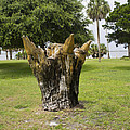 Dolphin Tree In Melbourne Beach Florida by Allan  Hughes