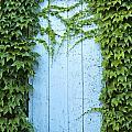 Door Framed By Plants by Jacek Malipan