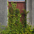 Door Of Old House by John Shaw