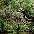 Dora Canal Tavares Florida by Cyndi Lenz