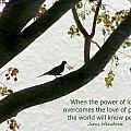 Dove Silhouette On Tree by Grace Dillon