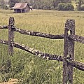 Down On The Farm by Edward Fielding