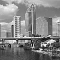 Downtown Tampa Skyline From Davis Islands by Bill Cobb