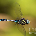 Dragonfly by Sharon Talson