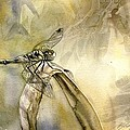 Dragonfly Watercolor by Alfred Ng