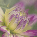 Dreamy Dahlia by Cheryl Butler