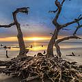 Driftwood by Debra and Dave Vanderlaan