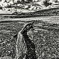 Driftwood Mono by Steve Purnell