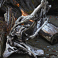 Driftwood On The Beach by Tom Janca
