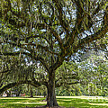 Dripping With Spanish Moss by Dale Powell