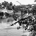 Ducks And Flowers In Lagoon Water by Ashish Agarwal