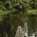 Dugout Canoe In Blackwater Stream by Pete Oxford