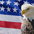Eagle And Flag by Alan Hutchins