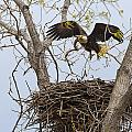 Eagle Nest by Jack R Perry