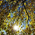 Early Autumn  by David Pyatt