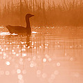 Early Morning Magic by Roeselien Raimond