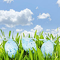 Easter eggs in green grass by Elena Elisseeva